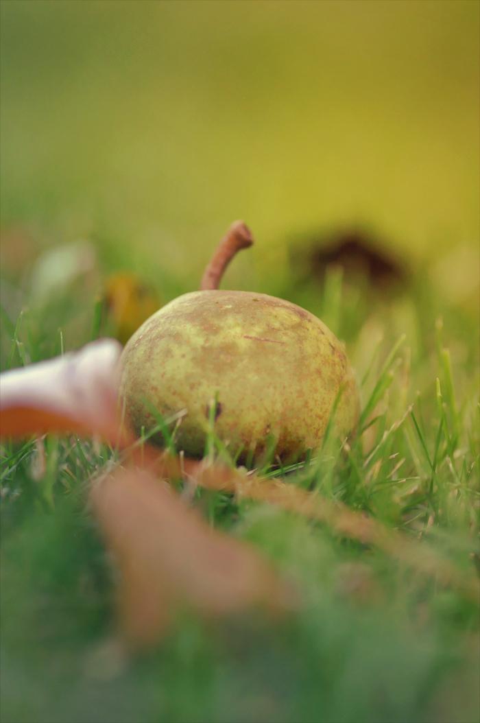 Herbst-Apfel