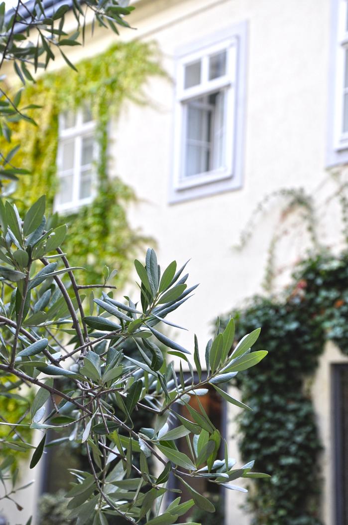 Wien_Hotel_Das_Triest_Garten-4