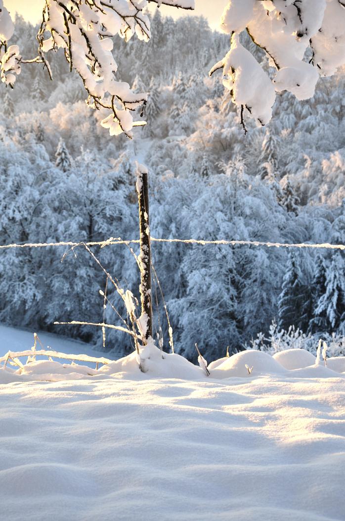 Schnee-Winter-Foto