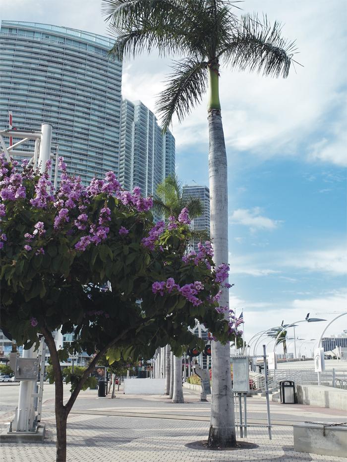 Miami_Reisetipps_Reisebericht 2