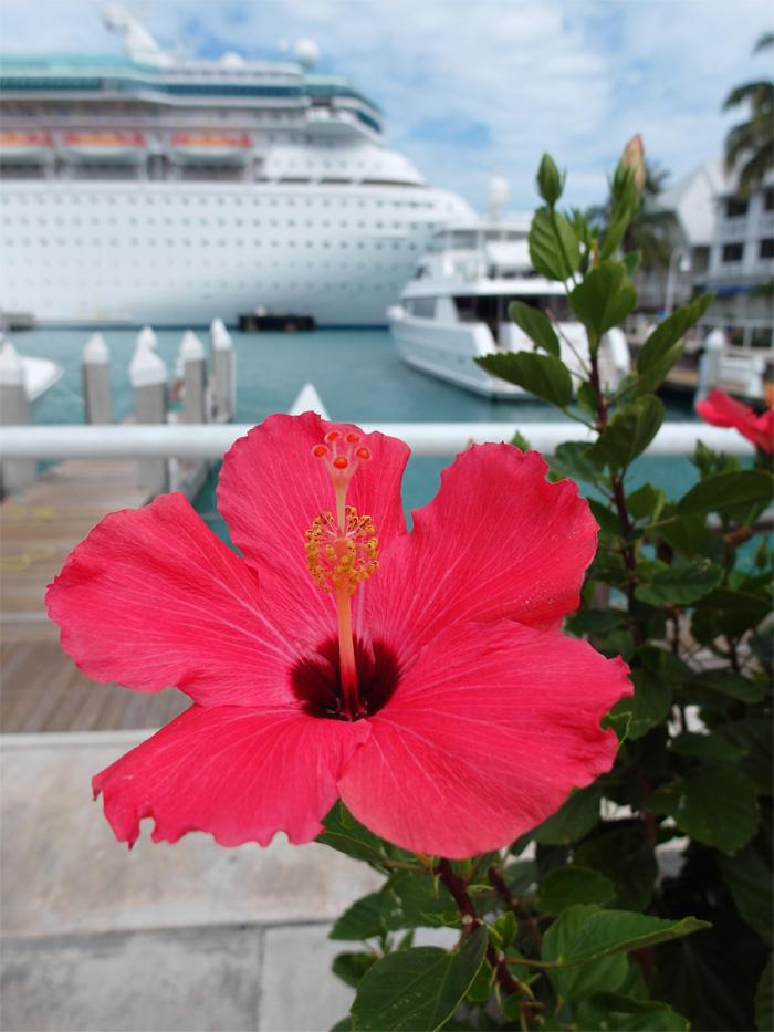 Cruise Port Key West