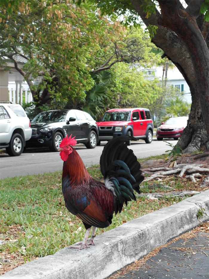 Hahn Key West