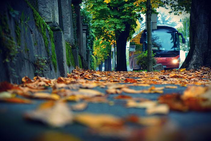 Fotografisch durch die Jahreszeiten Herbst 1