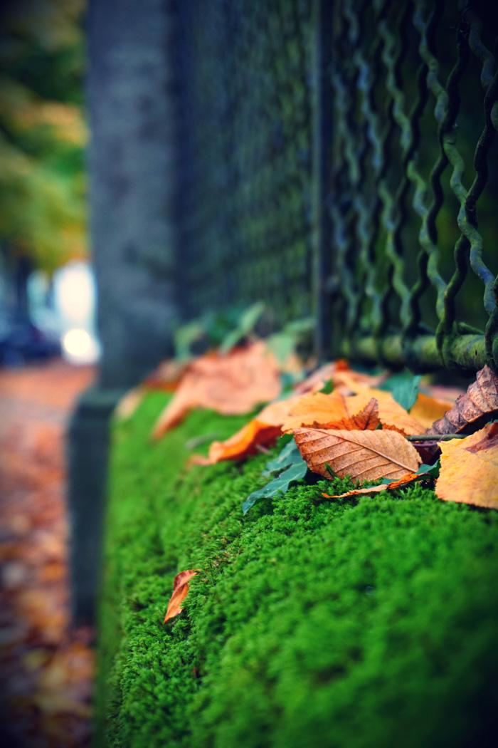 Fotografisch durch die Jahreszeiten Herbst 10