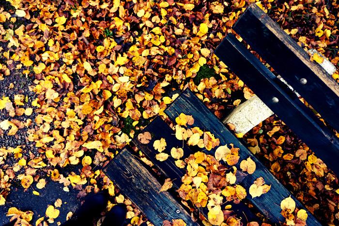 Fotografisch durch die Jahreszeiten Herbst 11