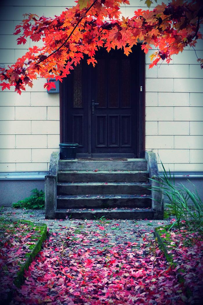 Fotografisch durch die Jahreszeiten Herbst 12