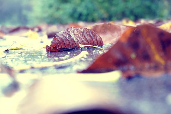 Fotografisch durch die Jahreszeiten Herbst 3