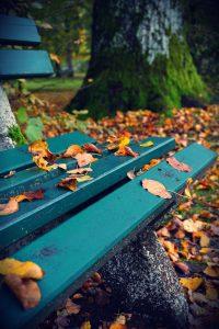 Fotografisch durch die Jahreszeiten Herbst 5