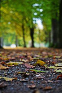 Fotografisch durch die Jahreszeiten Herbst 6