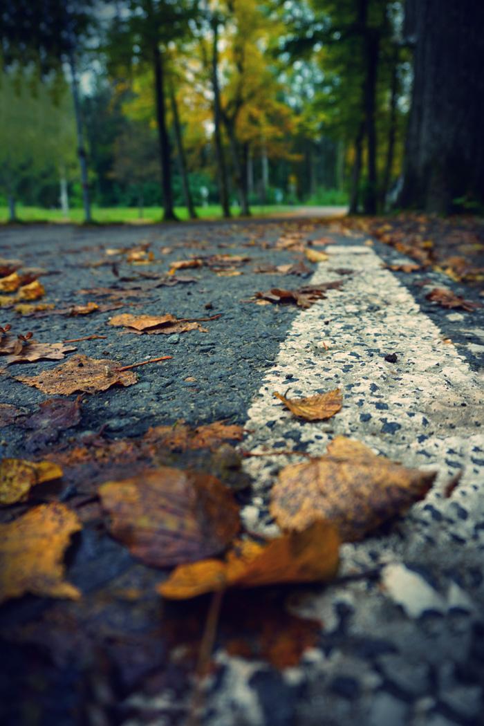 Fotografisch durch die Jahreszeiten Herbst 7