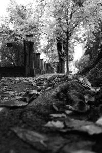Fotografisch durch die Jahreszeiten Herbst 8