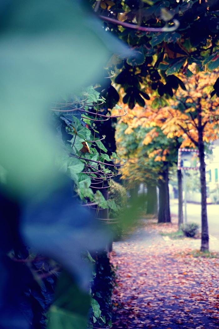 Fotografisch durch die Jahreszeiten Herbst 9