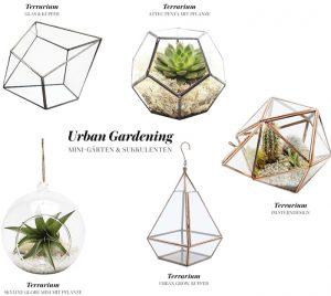 Terrarium fuer Sukkulenten Urban Gardening 3
