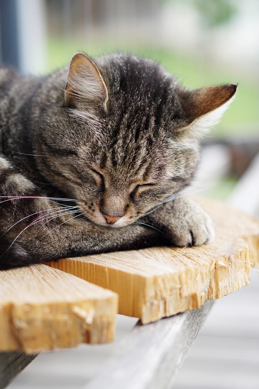 Artgerechtes Katzenfutter Pets Deli 1