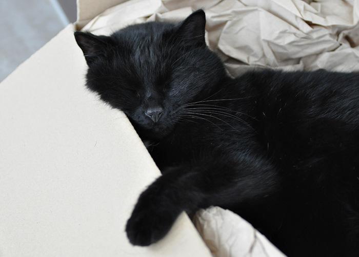 Artgerechtes Katzenfutter Pets Deli 12