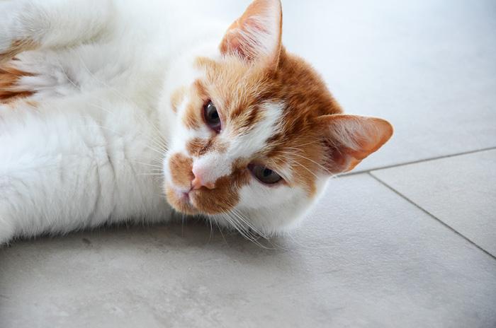 Artgerechtes Katzenfutter Pets Deli 13