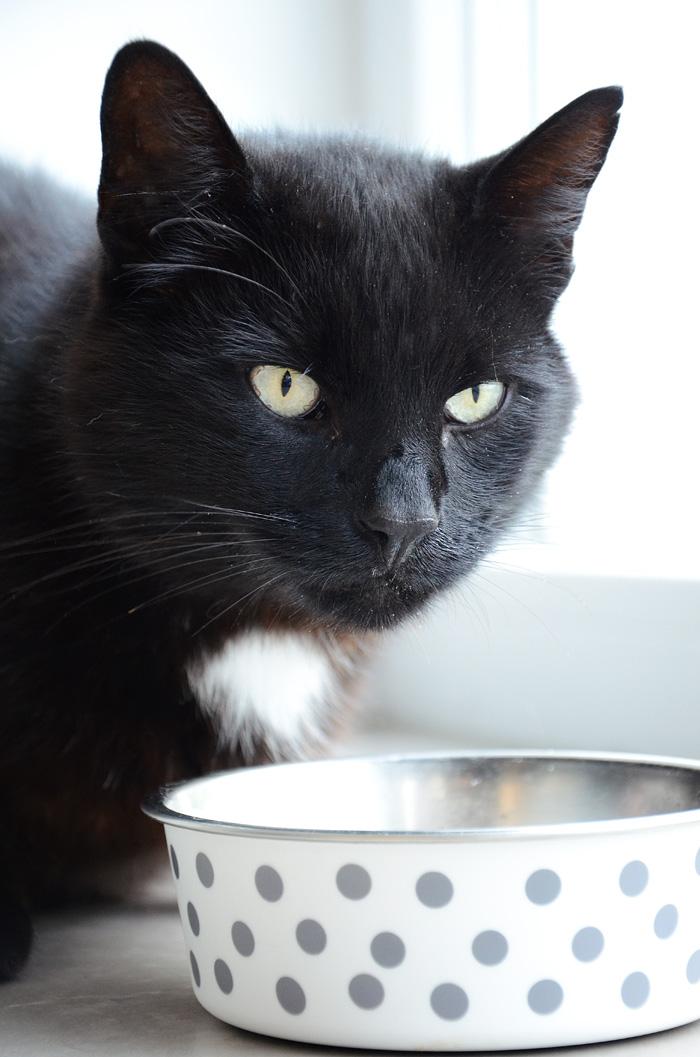 Artgerechtes Katzenfutter Pets Deli 7
