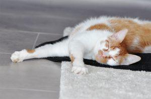 Artgerechtes Katzenfutter Pets Deli 9