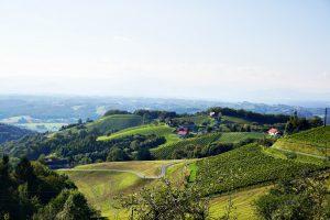 Buschenschank Empfehlung Suedsteiermark Buschenschank Reschkeller Weinbau Zeck 2