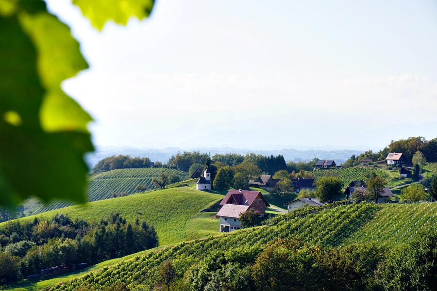 Buschenschank Empfehlung Suedsteiermark Reschkeller Weinbau Zeck 4