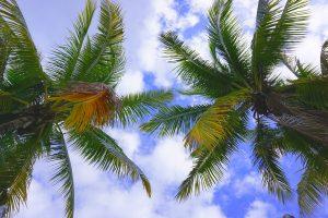 Travel Diary Key West Reisebericht Key West Weihnachten 1