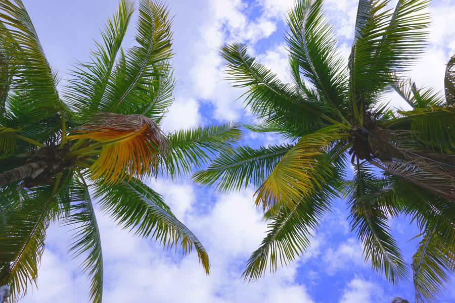 Travel Diary Reisebericht Key West Weihnachten 1