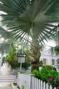 Travel Diary Key West Reisebericht Key West Weihnachten 12