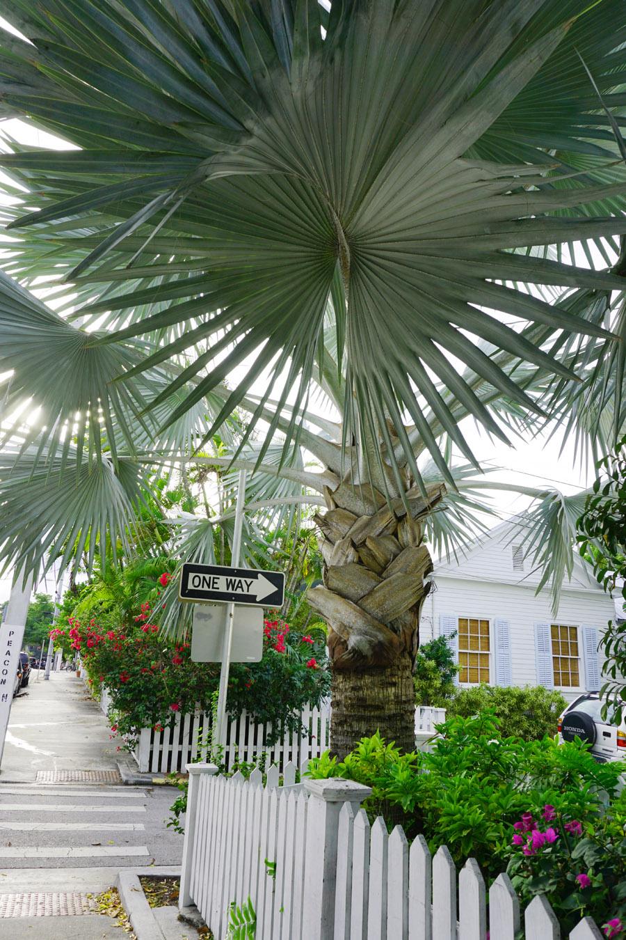 Travel Diary Reisebericht Key West Weihnachten 12