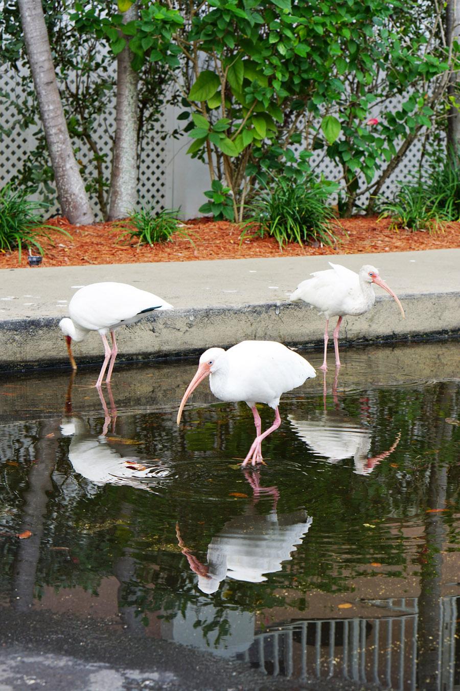 Travel Diary Reisebericht Key West Weihnachten 6