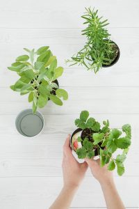 Die DIY Idee: Kräuter- oder Blumenampel selber machen