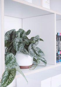 Pflanzen fürs Büro und ein kleines Beton DIY