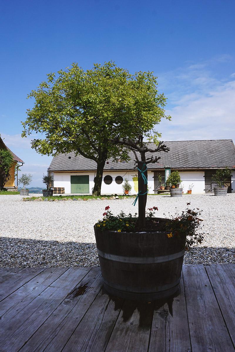 Buschenschank Weingut oberGuess Schlossberg –Suedsteirische Weinstrasse