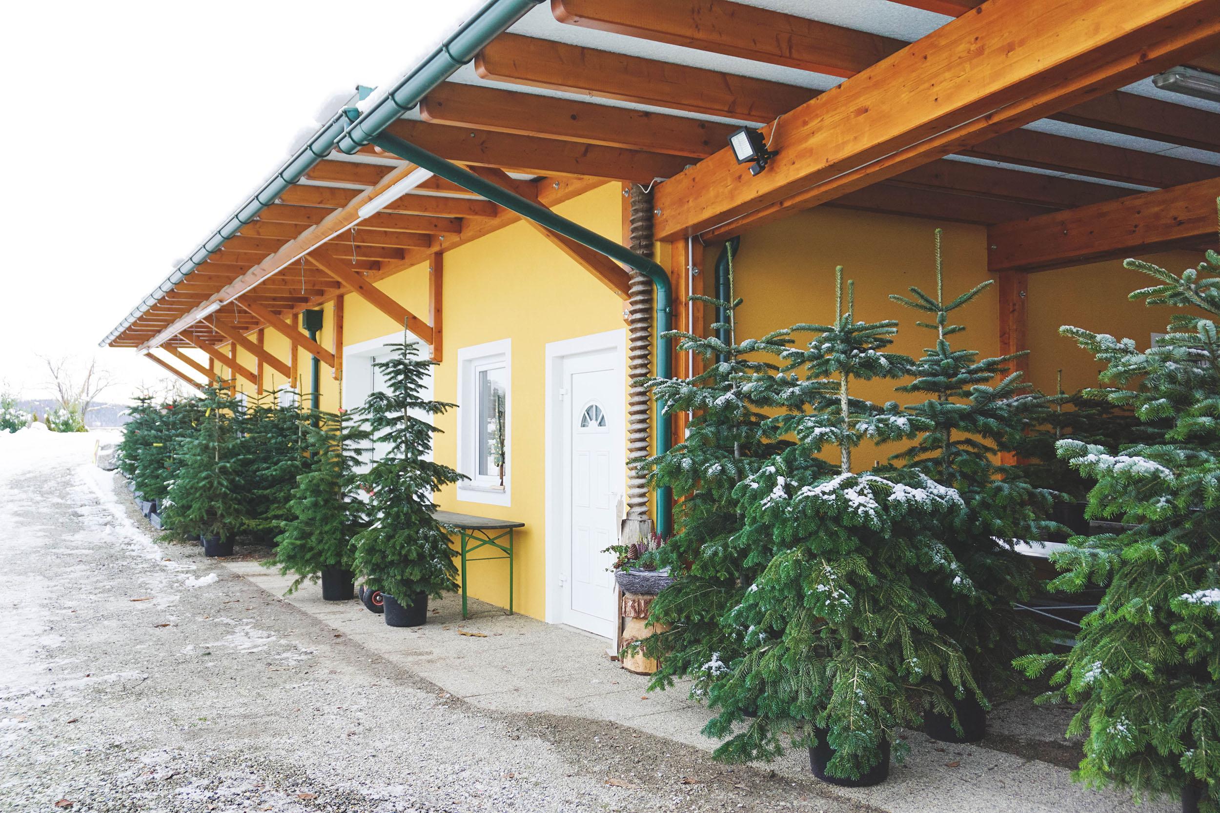 Christbaum mieten für nachhaltige Weihnachten