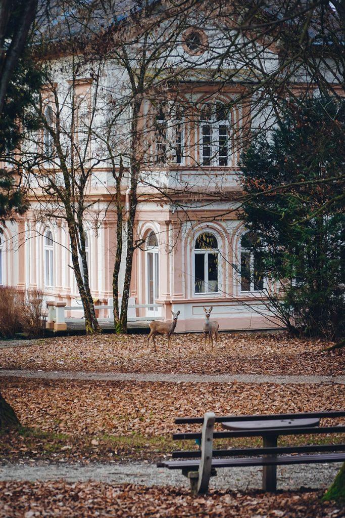 Waldbaden und ganzheitliche Wellness in der Natur im Hotel Miraverde in Bad Hall