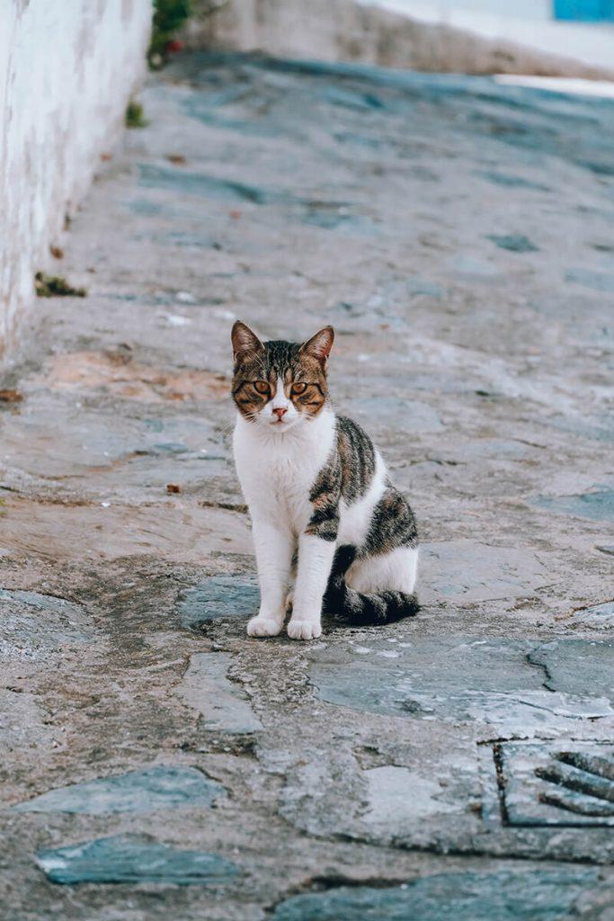 Die Katzen auf Skopelos